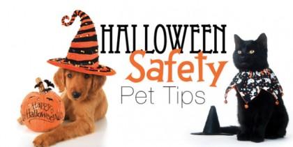 halloween-pet-safety