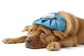 sickdog