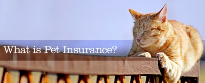 what_is_pet_insurance